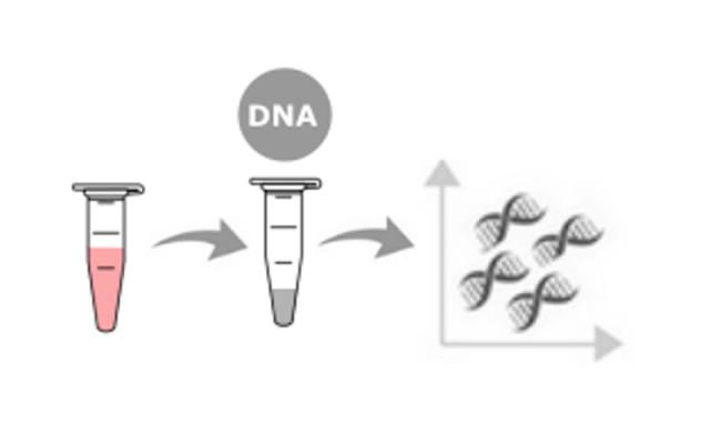 DNA extraction & quantification